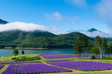ラベンダー畑と湖 金山湖 南富良野
