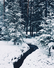Winter forest with much snow and little stream. Morning winter in calm forest. Fir trees covered with snow. Beautiful nature or view. Frosen small river.