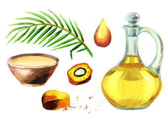 Palm oil set. Watercolor collection