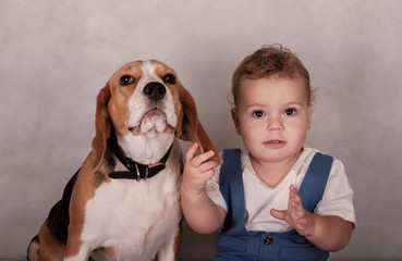 Beagle dog and little boy