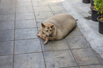 肥満・犬・健康・かわいい・デブ犬