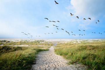 Langeoog, Fliegen, Freiheit, Urlaub, Entspannung: Wildgänse an einer Ostseeküste :)