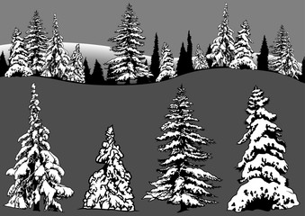 Snowy Coniferous Tree Set - Four Conifers and Snowy Forest, Design Elements Illustration, Vector