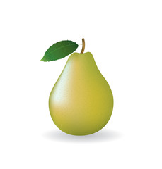 Pear on white background, vector