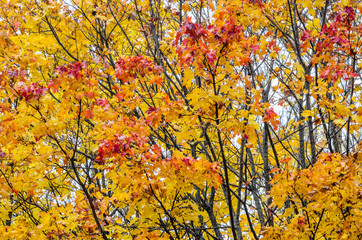 Branches of trees in an autumn park. Seasonal background