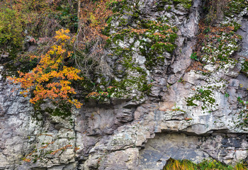 rocky cliff with plants in autumn. lovely background with lots of textures