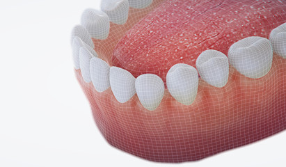 3D illustration teeth and gum model.
