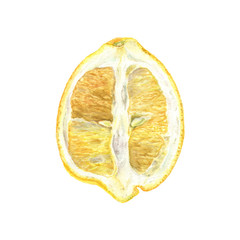 Botanical watercolor illustration of yellow lemon cut isolated on white background