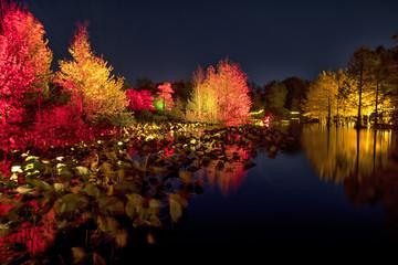illuminated autumn park