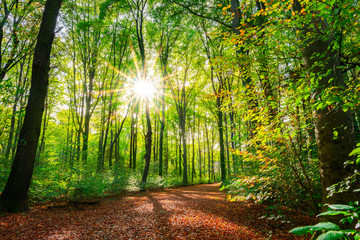 Wall Mural - Autumn forest with path and bright sun
