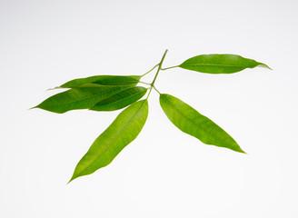 leaf or peel mango leaf on a background.