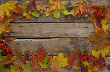 Autumn background, Maple leaves with chestnuts on a wooden table, Top view