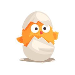 Funny yellow newborn chicken in broken egg shell