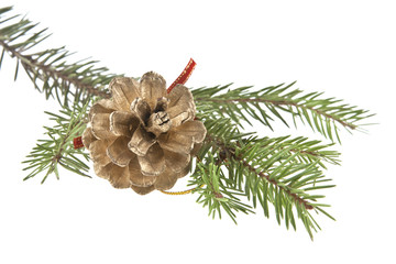 Golden pine cone and branch of Christmas tree isolated on white background