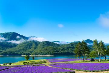 ラベンダー畑と湖 金山湖 南富良野 富良野
