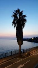Palmier de nuit