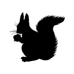 Squirrel silhouette. Black white icon. Vector illustration.