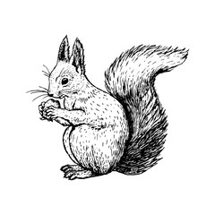 Hand drawn squirrel. Vector sketch.