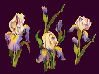 Set of watercolor hand painted irises on purple background