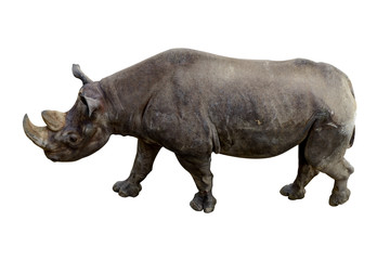 Animal rhino with a large tusk isolated on a white background