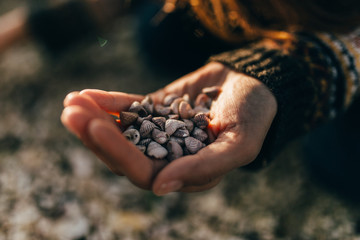 Hand holding small shells