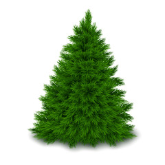 Bushy unadorned Christmas tree isolated on white background