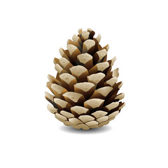 Vector pine cone on white background