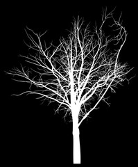 bare white tree silhouette on black