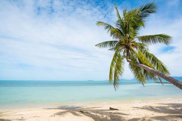 Foto op Plexiglas Caraïben Coconut trees stretch into the sea
