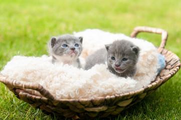 Two sweety kittens