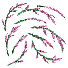Set of watercolor heather branches on white background