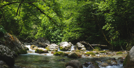 Panorama of a mountain river in the Caucasus around the trees