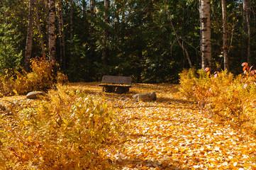 Park bench amid fall colors around Moose Lake in Northern Idaho