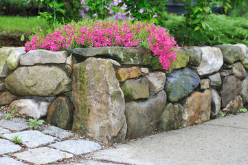 Retaining Wall And Pink Phlox
