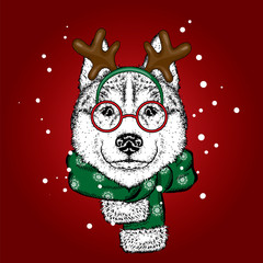 A beautiful dog in a deer suit and scarf. Antler. Vector illustration. Purebred puppy in clothes and accessories. Husky or wolf. New Year's and Christmas.