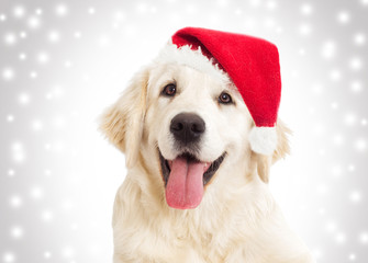 dog portrait in the New Year and Christmas hat
