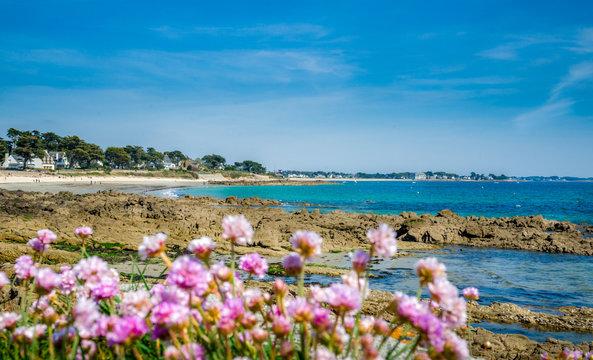 Plage de Carnac (Plage de Légenèse) rochers et fleurs, Morbihan, Bretagne, France