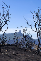 Gran Canaria after forest fire