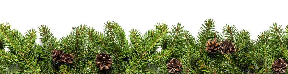 Evergreen branches on white