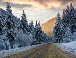 asphalt road through spruce forest at sunset. gorgeous nature scenery in winter mountains