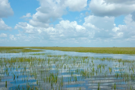 Vast Landscape Vista of Florida Everglades Marshland under Blue Sky