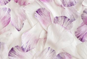 Ranunculus petals, closeup