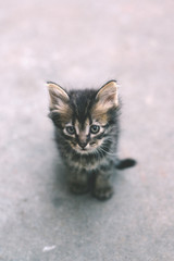 Young kitten looking cautious