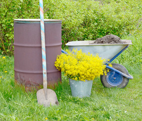 rusty brown old barrel, garden wheelbarrow, shovel earth from a material of titanium with a wooden handle, a bouquet of yellow flowers Barbarea in galvanized metal pail on green grass in spring