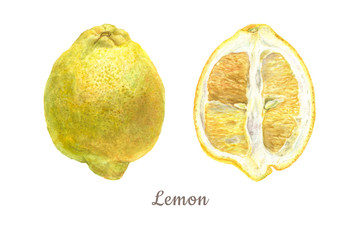 Botanical watercolor illustration of yellow lemon whole and cut isolated on white background