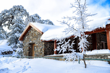 Forest lodge in the snow