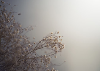 Dried baby's breath in a grey mist