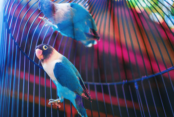 Two small blue birds enclosed in a bright, vivid cage