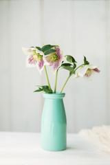 Hellebores in a vase