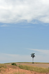 Solitary palm tree on the horizon, in arid environment
